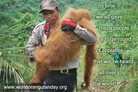 orangutan, kalimantan, sumatra